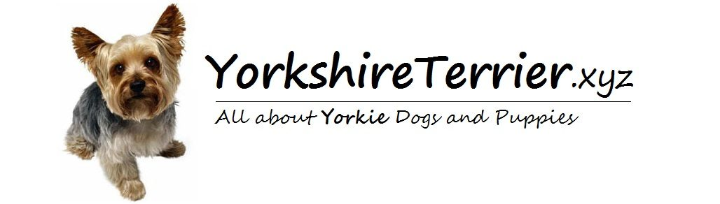 YorkshireTerrier.xyz