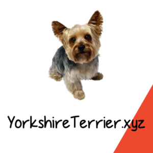 YorkshireTerrier.xyz Profile